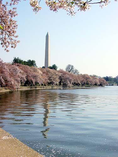 Il Washigton Memorial, l'obelisco simbolo della capitale Americana