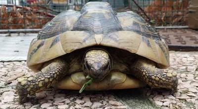 medicina-delle-tartarughe