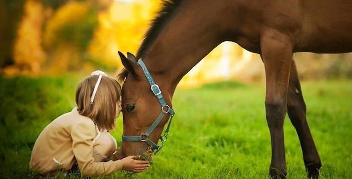 cavallo sintonia animali terapia