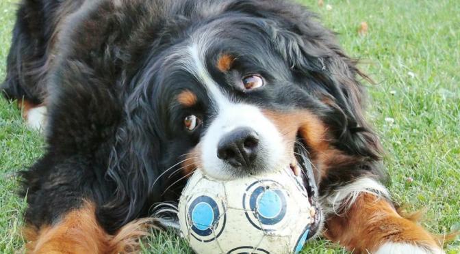 Pet therapy: moda o tradizione popolare?