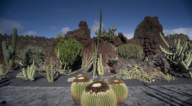 L'idea visionaria di César Manrique celata nel Giardino dei Cactus