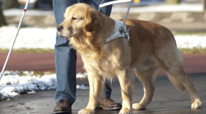 Il cane guida ideale come dovrebbe essere?