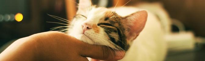Canale pets: i nostri animali domestici, veterinaria