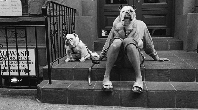 Elliott Erwitt e i cani | Mostra fotografica a Treviso