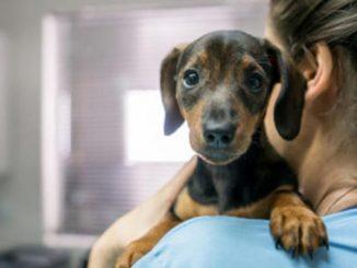 Le Vaccinazioni nel cane